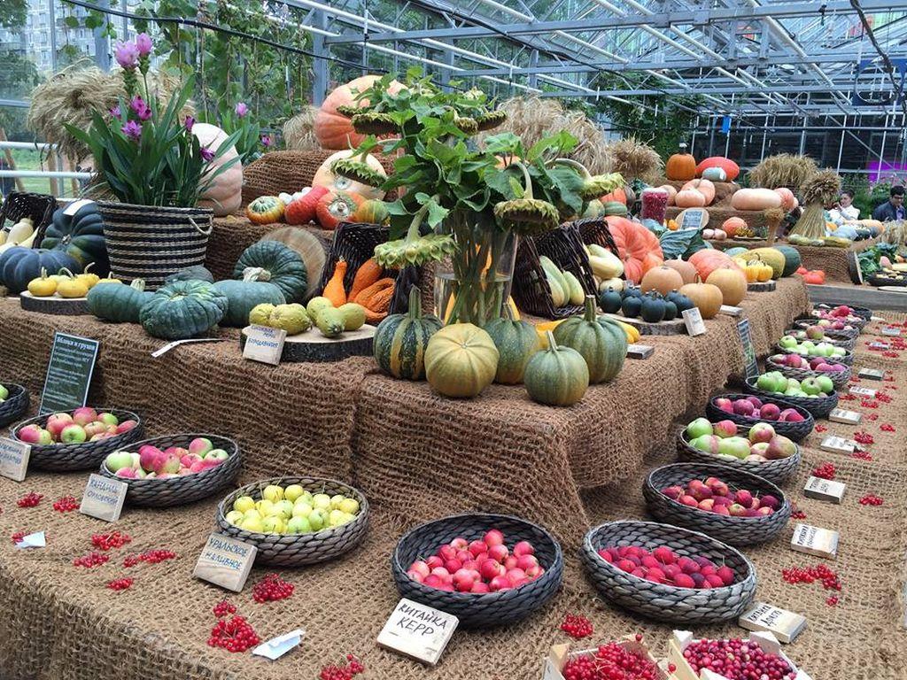 выставка в Ботаническом саду МГУ «Аптекарский огород»