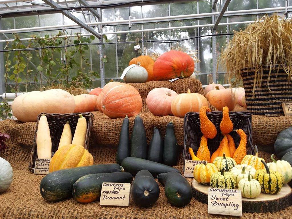 выставка плодов в Ботаническом саду