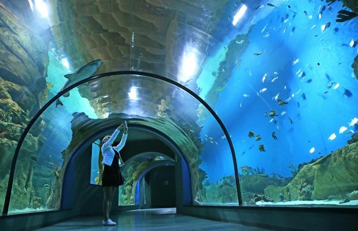 океанариум москвариум на вднх. фото аквариума