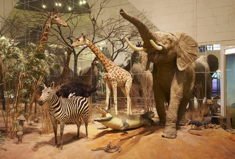 экспонаты дарвиновского музея