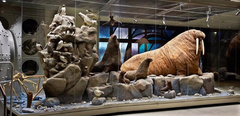 Дарвиновский музей фото