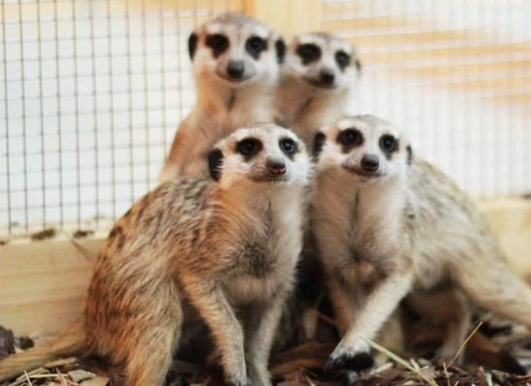 Контактный зоопарк в ТЦ Коламбус