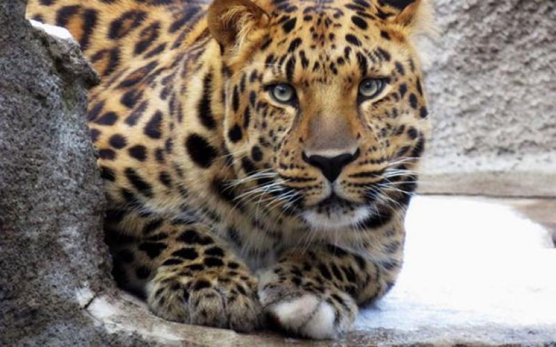 московский зоопарк на баррикадной животные