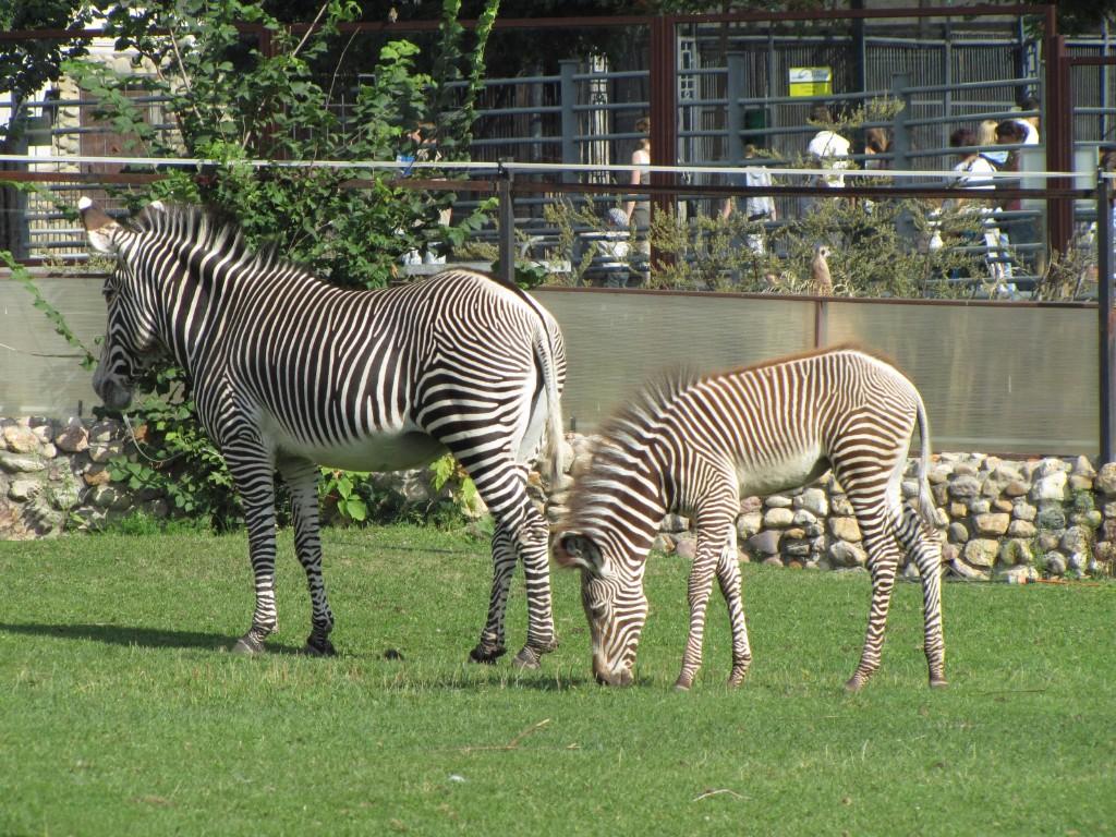 официальный сайт московского зоопарка