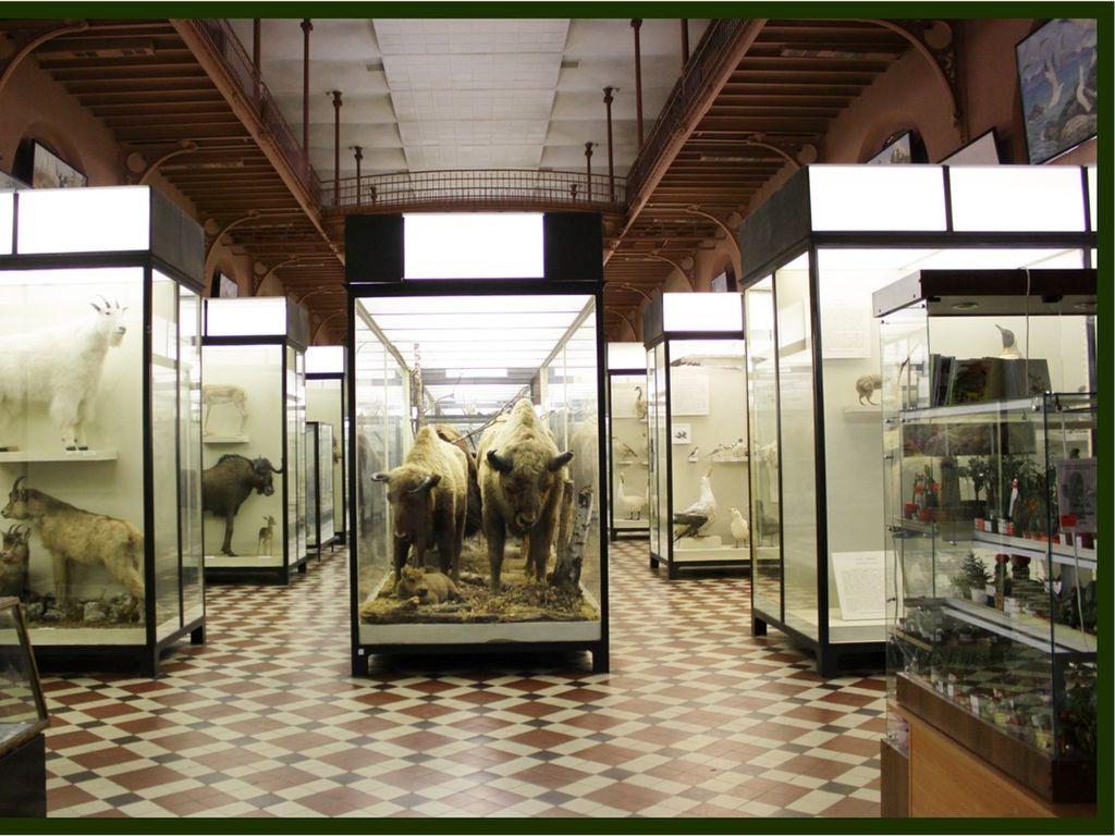 Зоологический музей МГУ Ломоносова