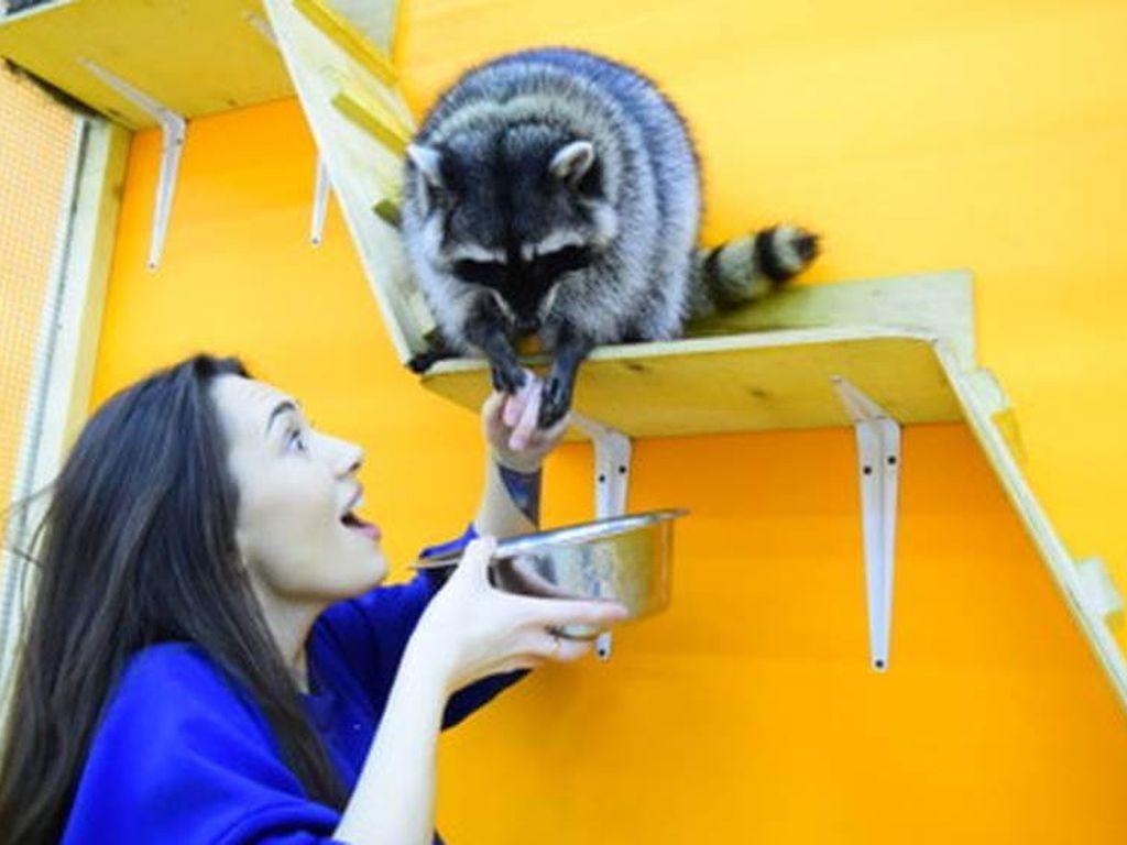 Сеть трогательных зоопарков «Погладь енота»- ТОП- это 10 лучших контактных зоопарков