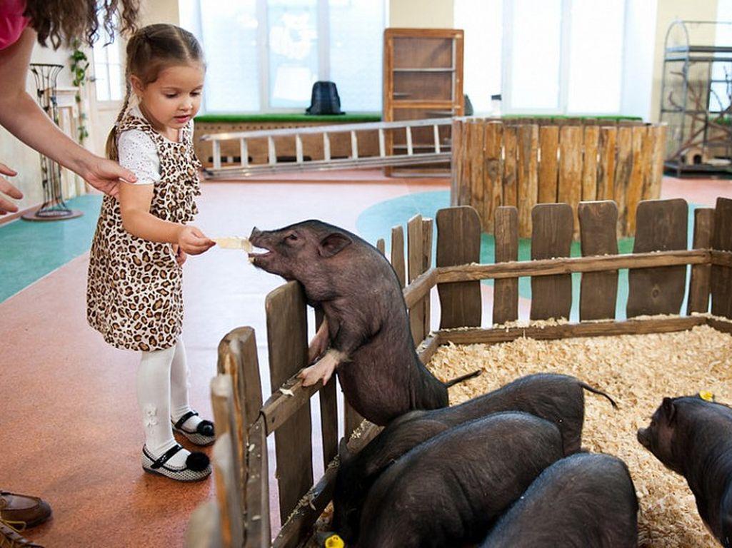 Контактный зоопарк «Лесное посольство» в Москве