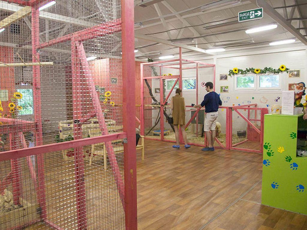 Контактный зоопарк «Живой уголок» в парке «Сокольники»