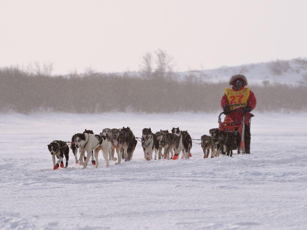 Катание на упряжке собак в Питомнике ездовых собак Северный