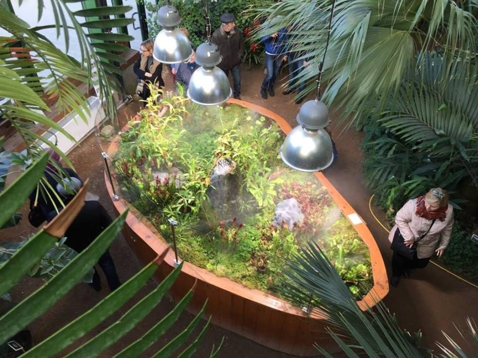 Секреты хищных растений в Аптекарском огороде