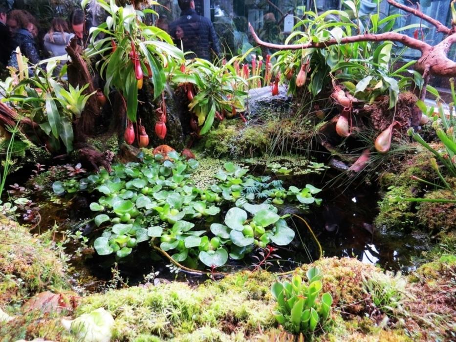 мастер-классы в ботаническом саду МГУ