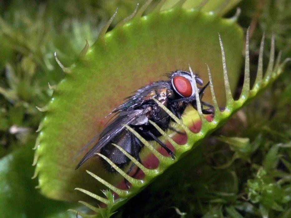 Секреты хищных растений в ботаническом саду
