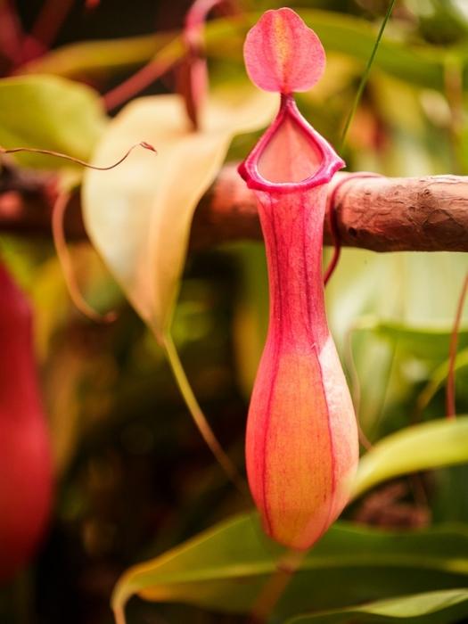 хищные растения в ботаническом саду МГУ