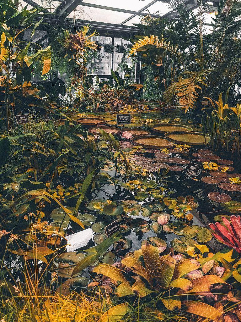 Осетры, японские карпы в Ботаническом саду