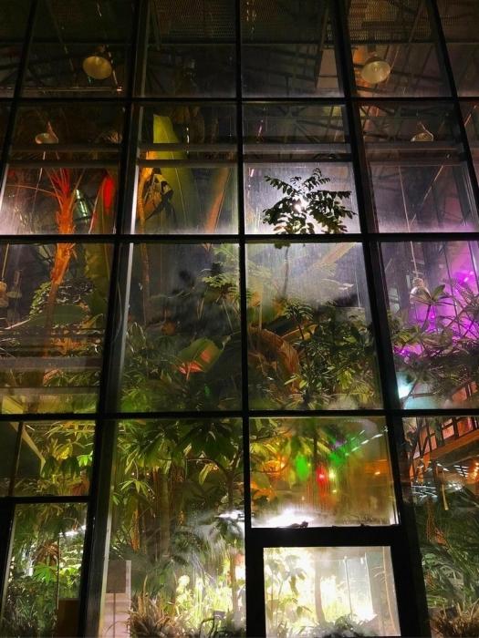 Концерт Тропическое Рождество в ботаническом саду с фуршетом