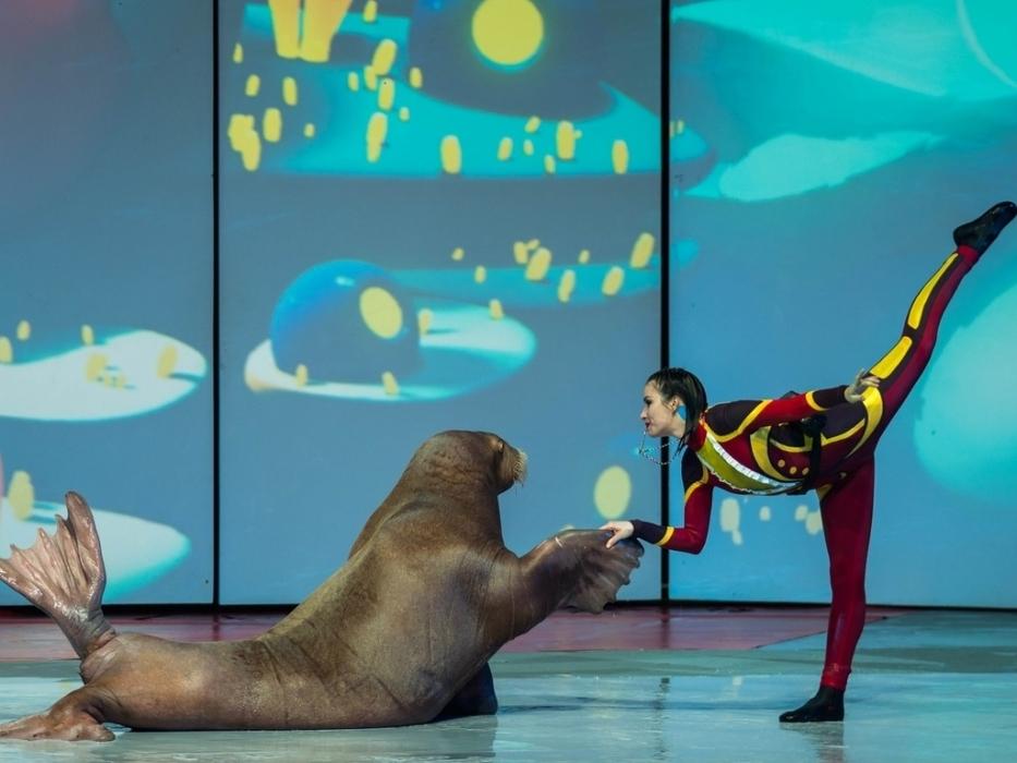 Шоу с морскими котиками на ВДНХ