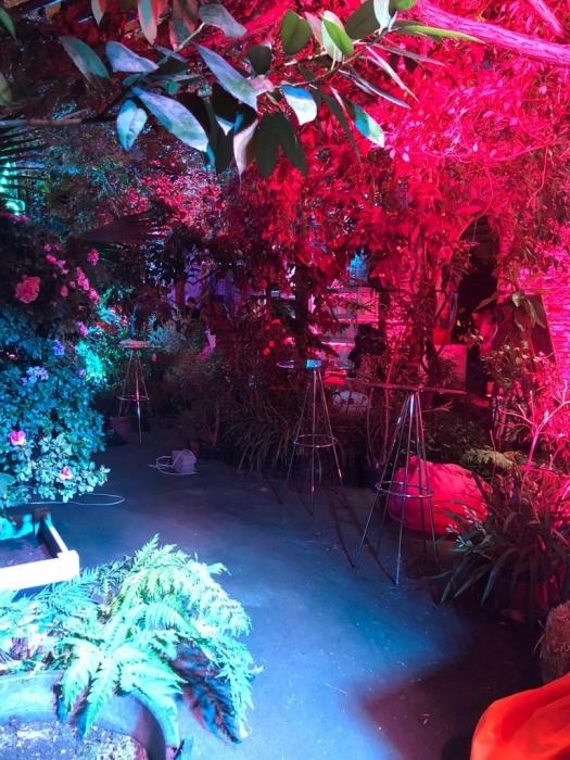 новогоднее шоу в Ботаническом саду