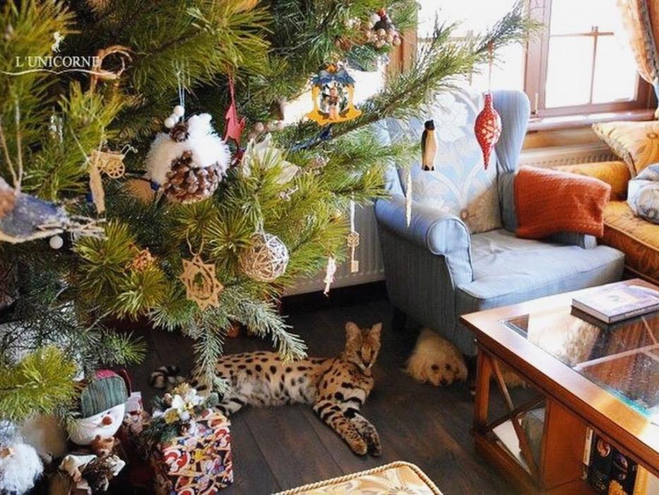 выставка самых редких домашних кошек в мире