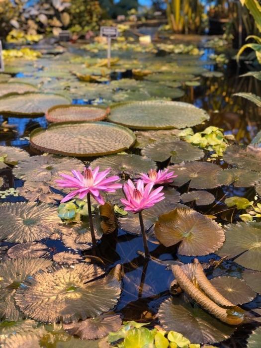 Цветочки во время цветения