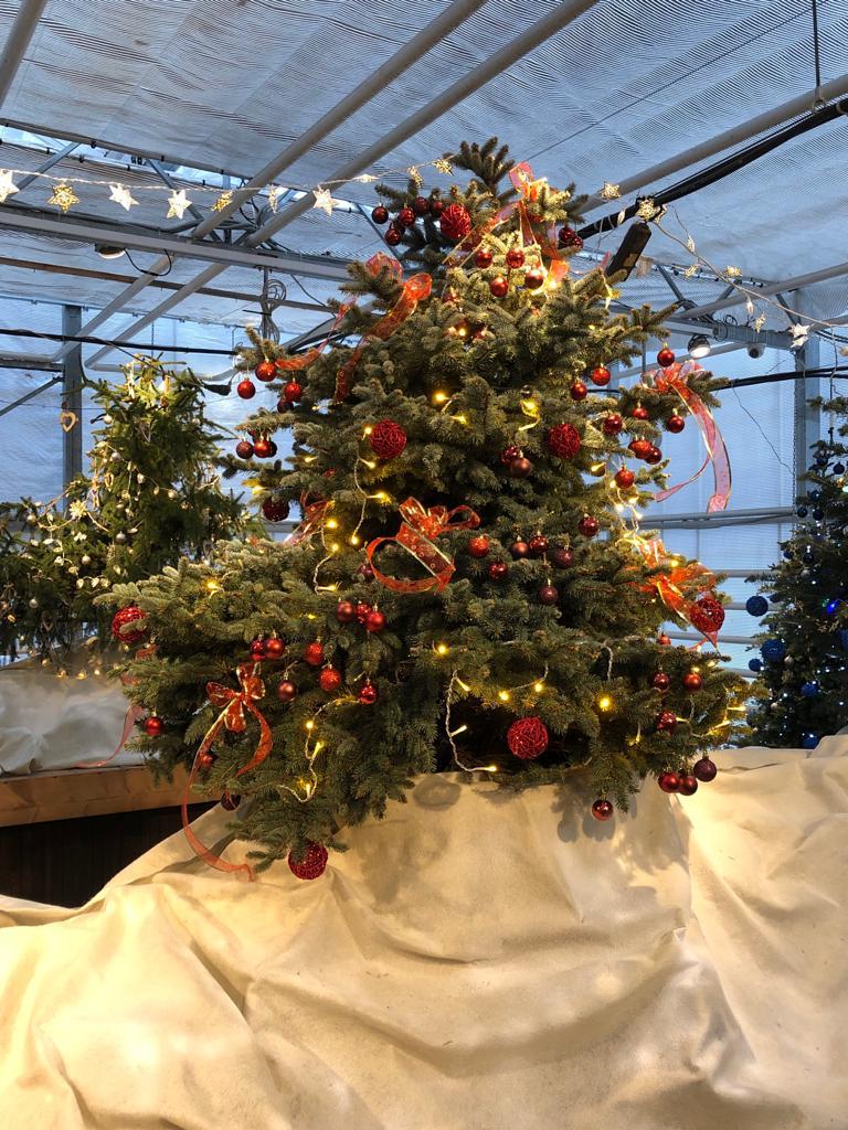 Новогодняя выставка в ботаническом саду МГУ
