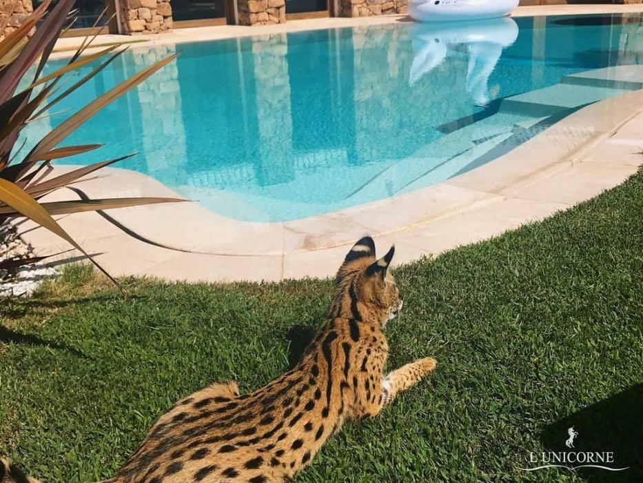 Выставка самых дорогих и редких домашних кошек в Аптекарском огороде