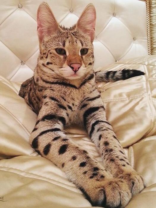 Выставка самых дорогих и редких домашних кошек в Ботаническом саду
