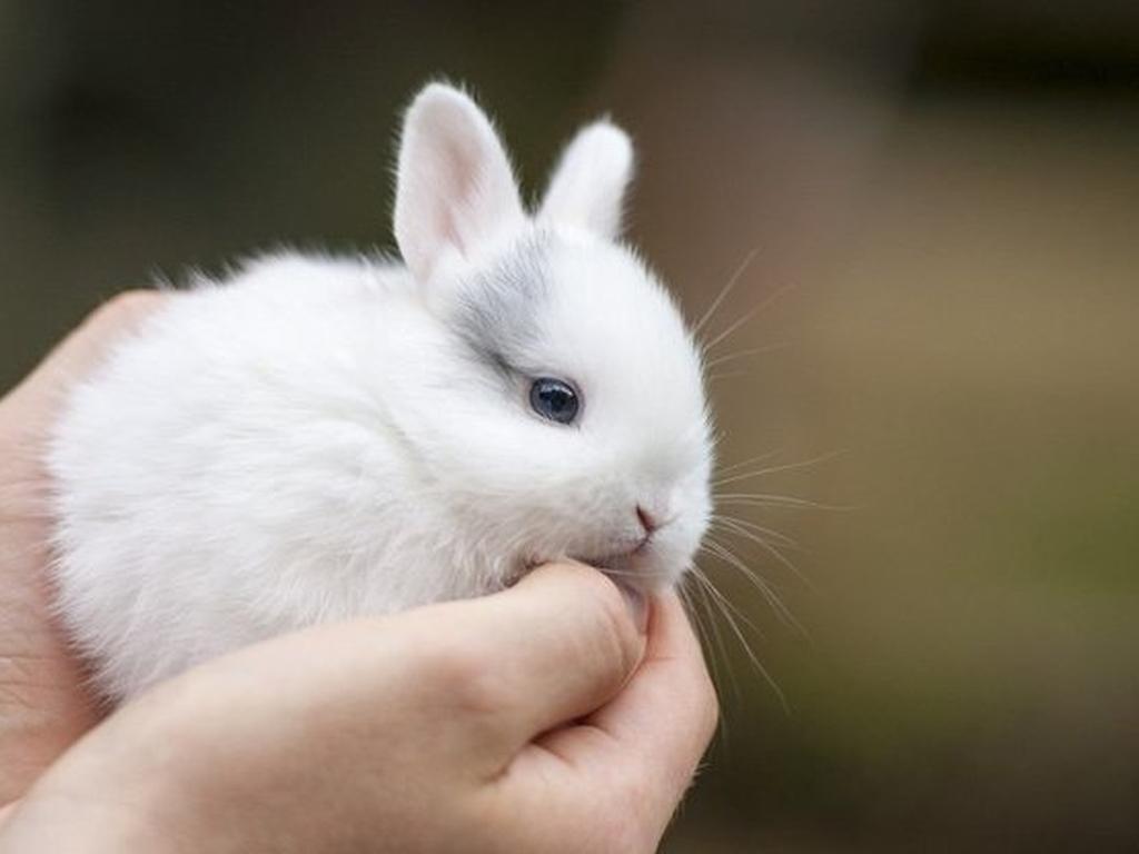 Выставка карликовых кроликов в Биологическом музее Тимирязева