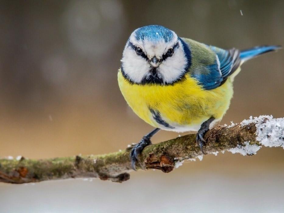 Птичье кафе в Таганском парке