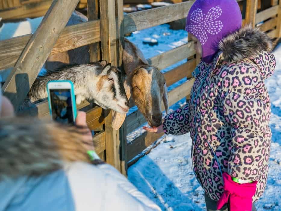 Ребенок кормин животных на ВДНХ в Дни открытых дверей