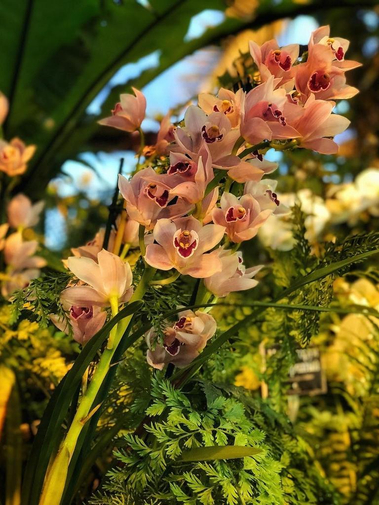 nochnoye-poseshcheniye-botanicheskogo-sada-mgu3