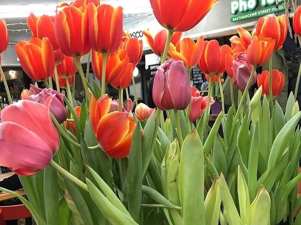 аптекарский огород когда будут тюльпаны