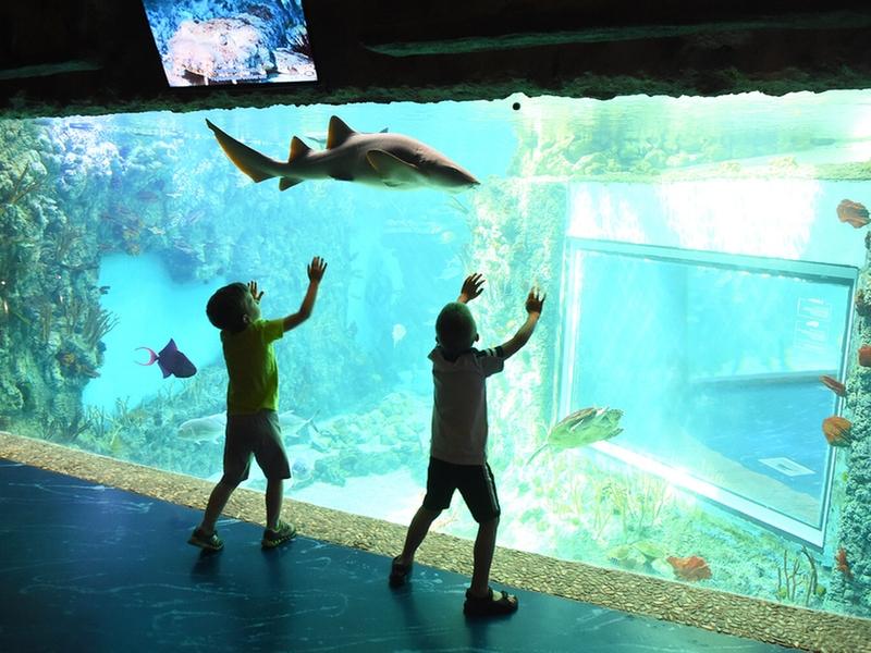 Экспозиция Моря и океаны океанариум Крокус Сити