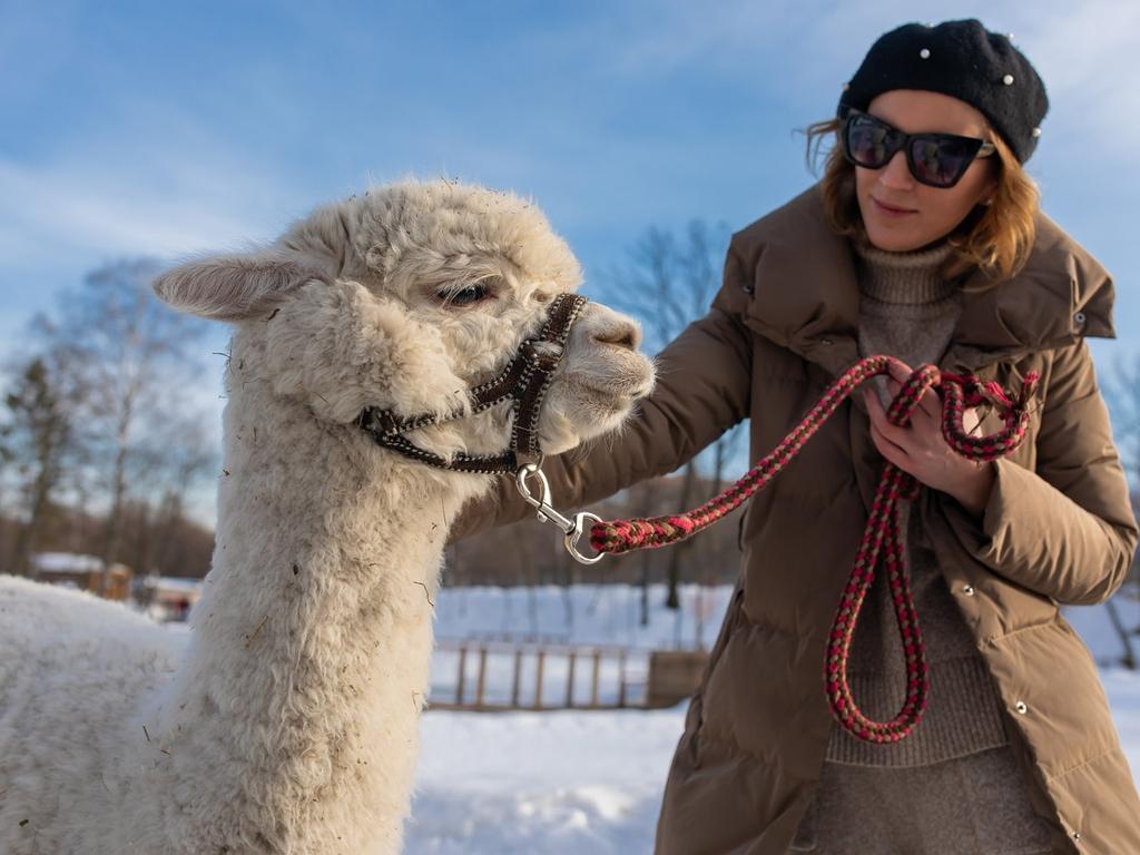 Прогулки с забавным альпака на ВДНХ