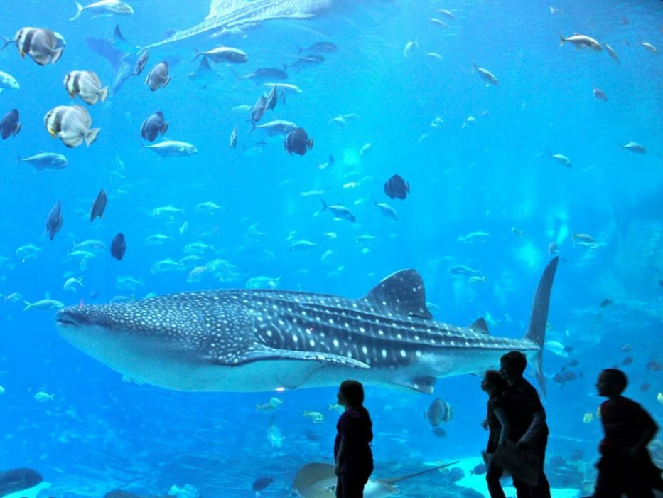 Поход в океанариум на ВДНХ на весенних каникулах