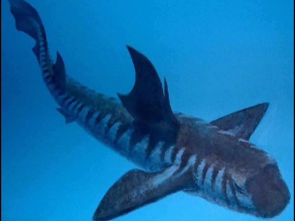 Выставка Древние акулы. История одной коллекции