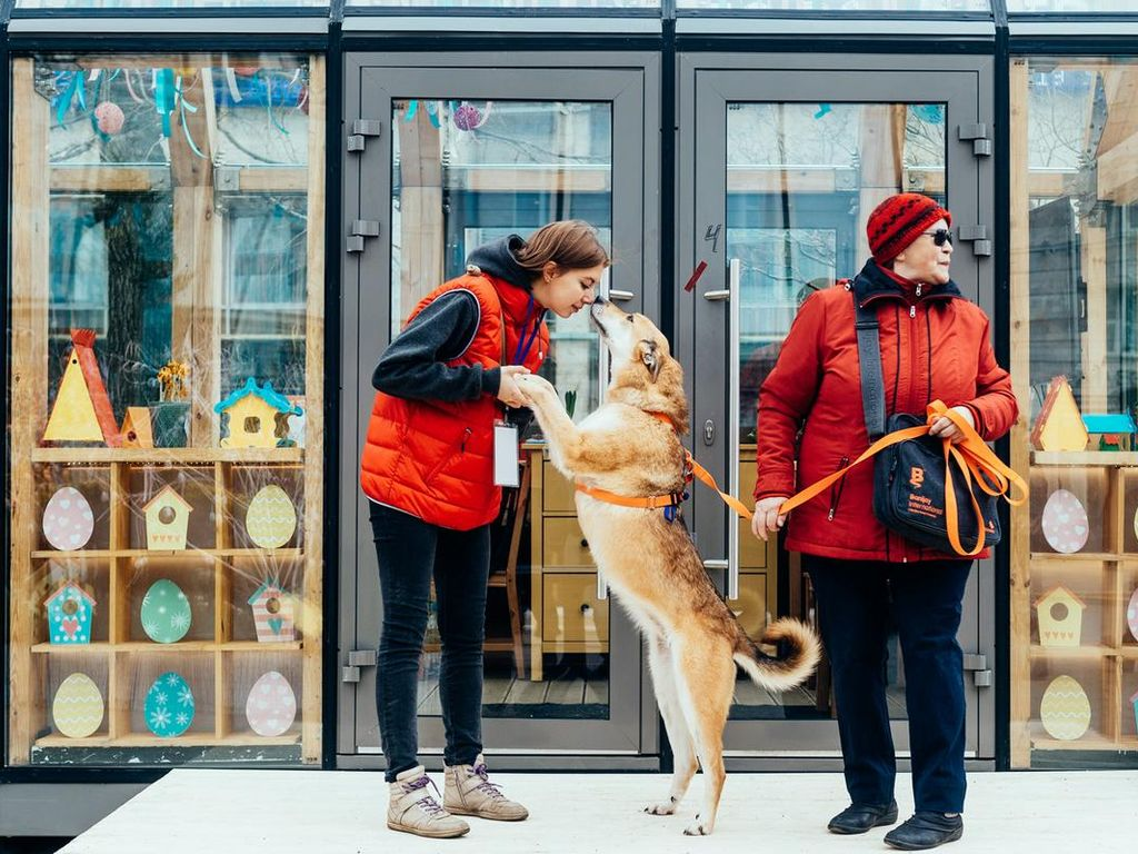 Мероприятия для домашних животных на фестивале Пасхальный дар