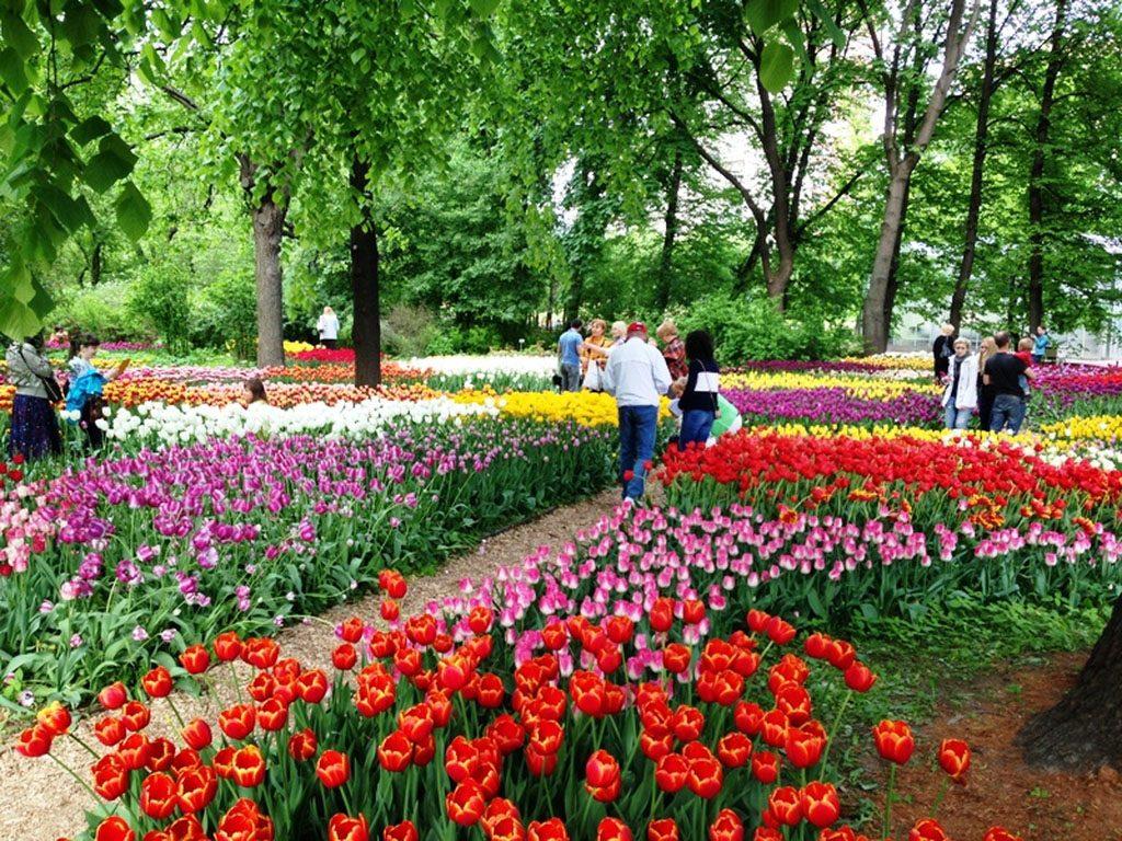 Весенний фестиваль цветов в Ботаническом саду МГУ