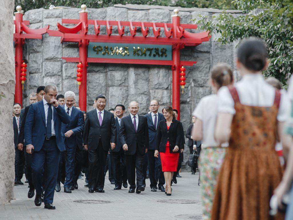 Из Китая с любовью: две больших панды в Московском зоопарке