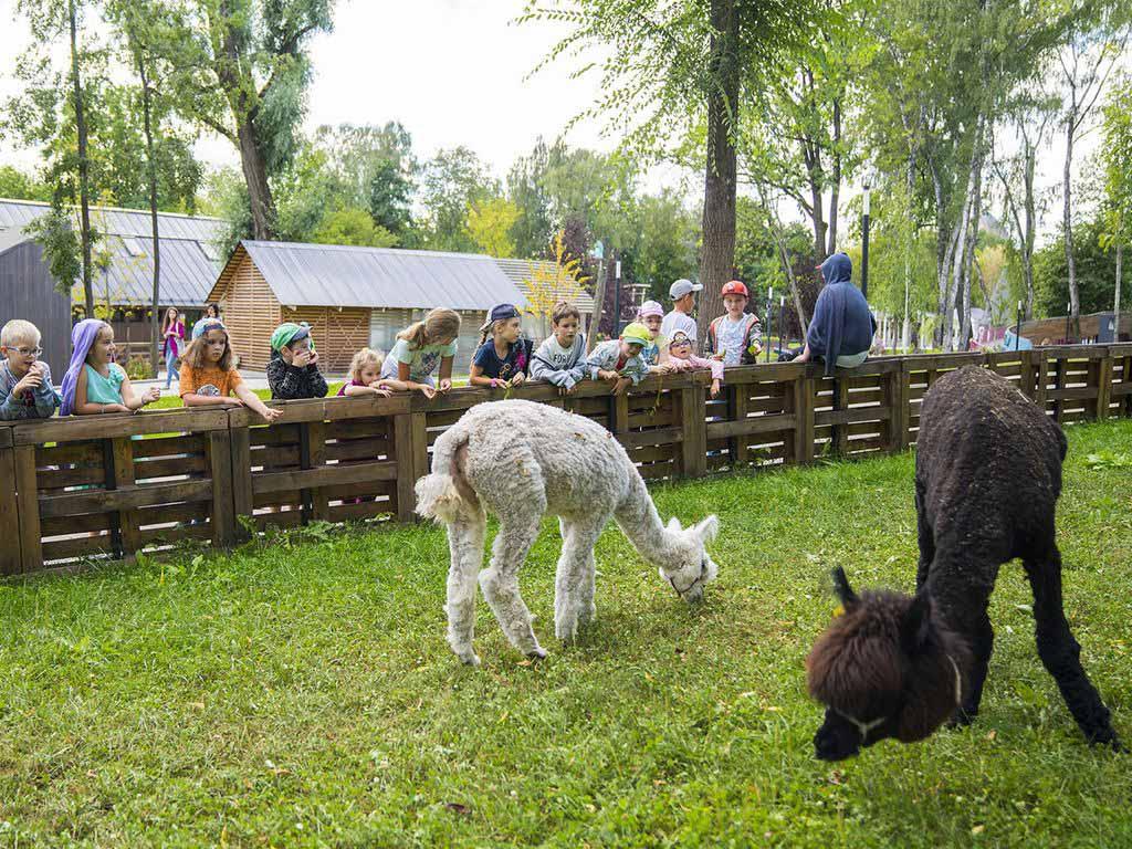 Животные на городской ферме
