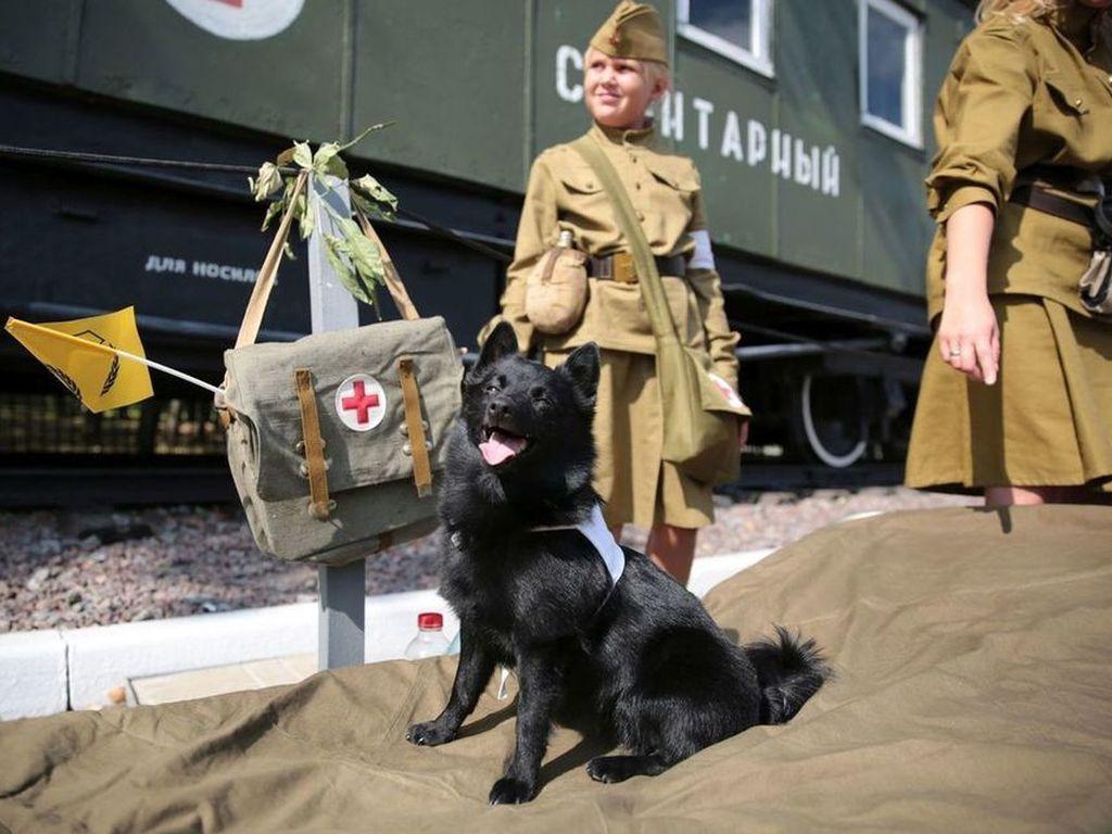 День фронтовой собаки в Музее Победы