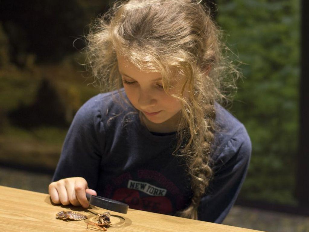 Дарвиновский музей занятия для детей