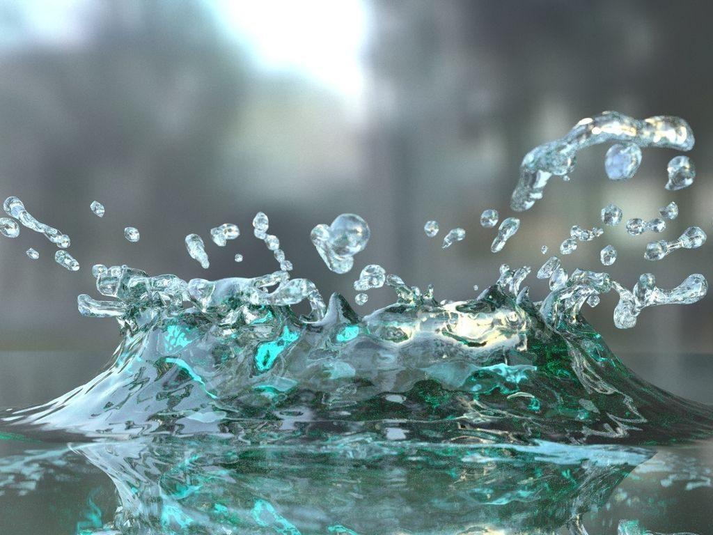 Практическое занятие обитатели воды
