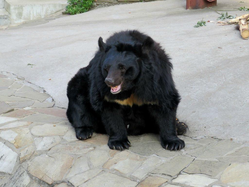 Московский зоопарк встречает осень: Мед медведям, кукуруза - суркам