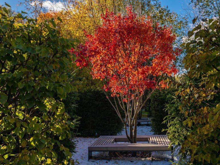 Осенний лабиринт в ландшафтном парке на ВДНХ