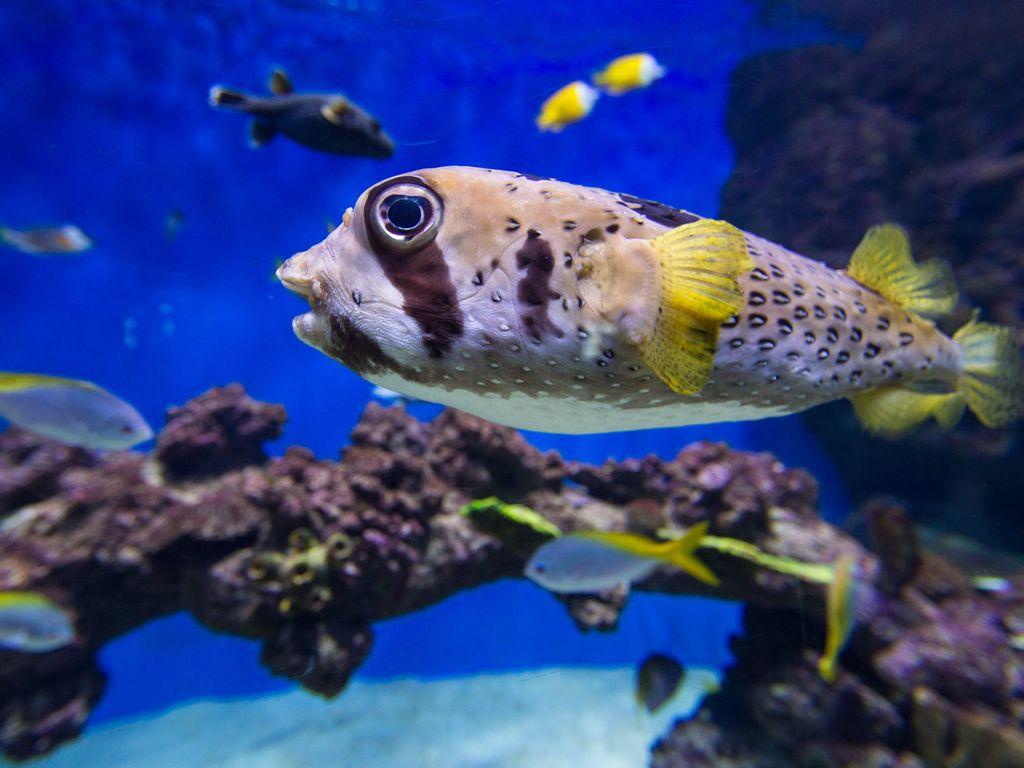 Посмотреть на рыбок в Москвариуме