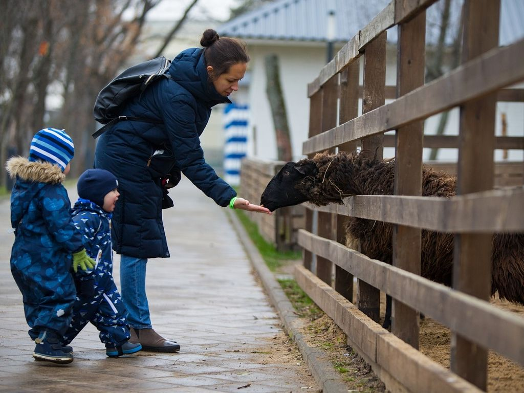 Встречи с животными на Городской ферме
