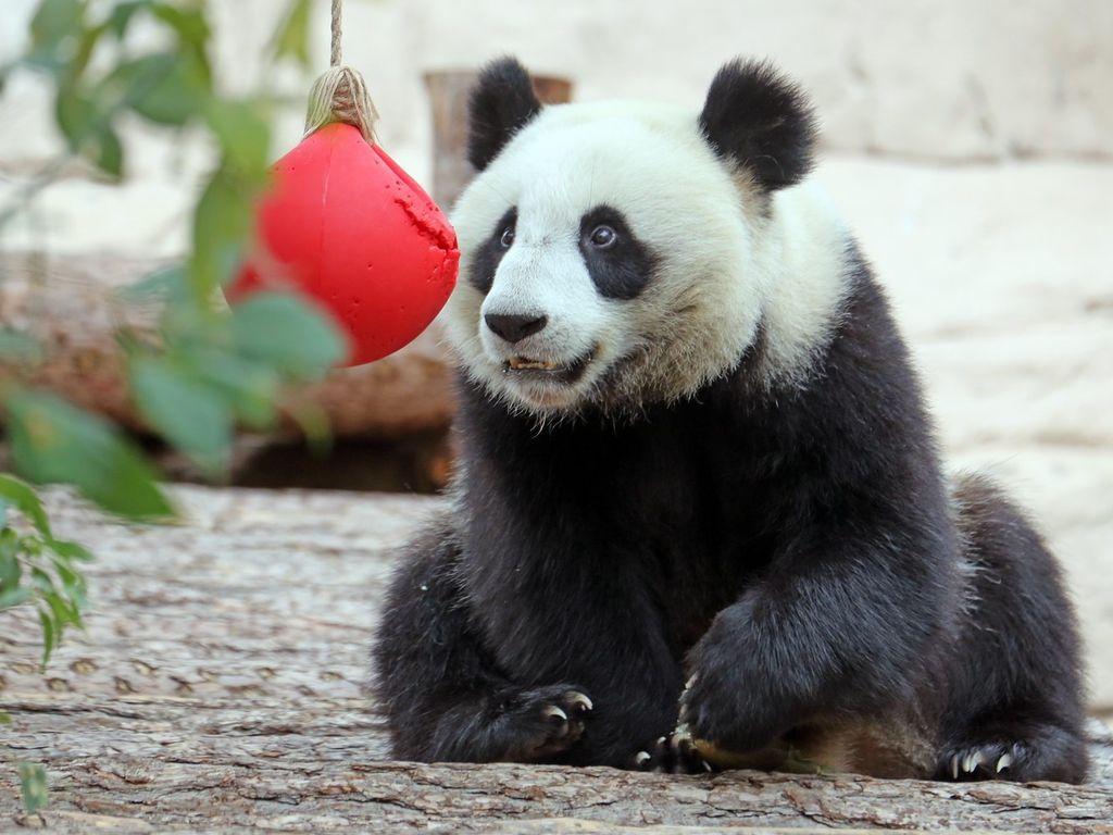 Акция В зоопарке ждут подарки