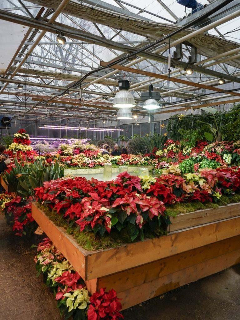 Новогодний сад в Ботаническом саду