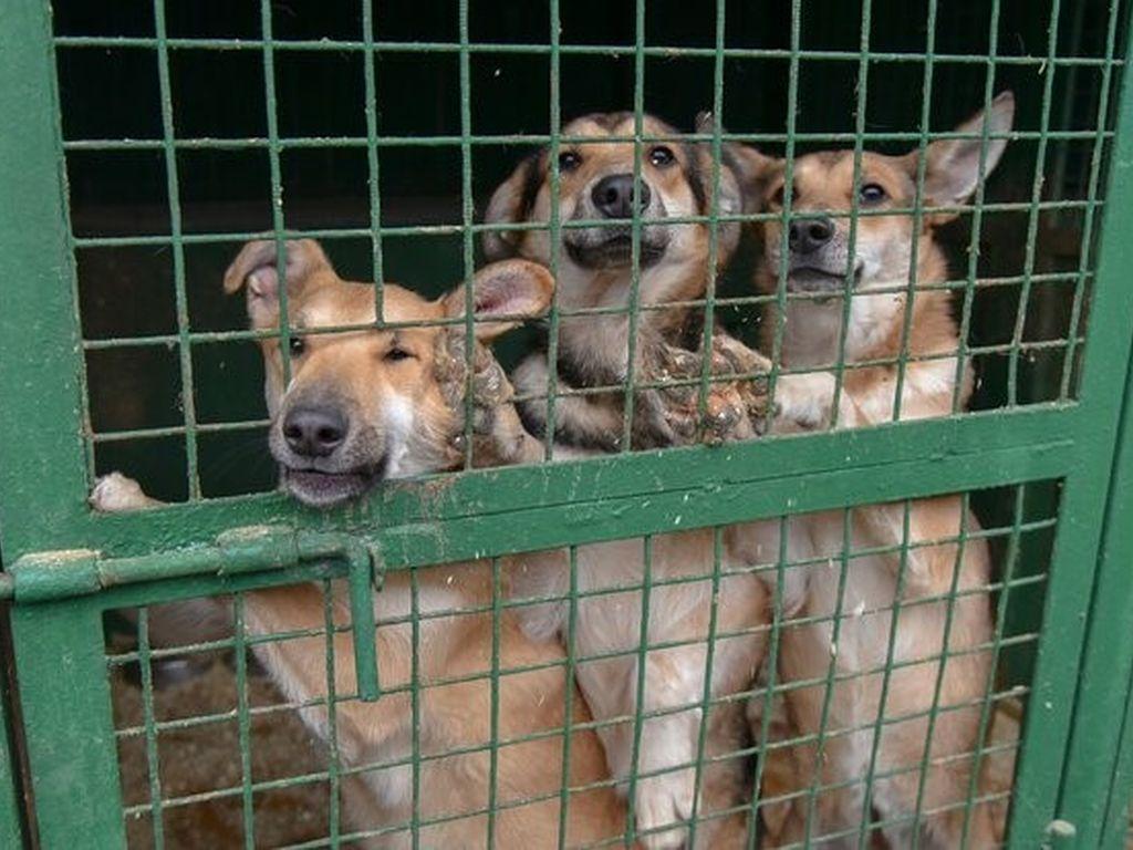 В Москве приютили 2,3 тысячи собак и 800 кошек