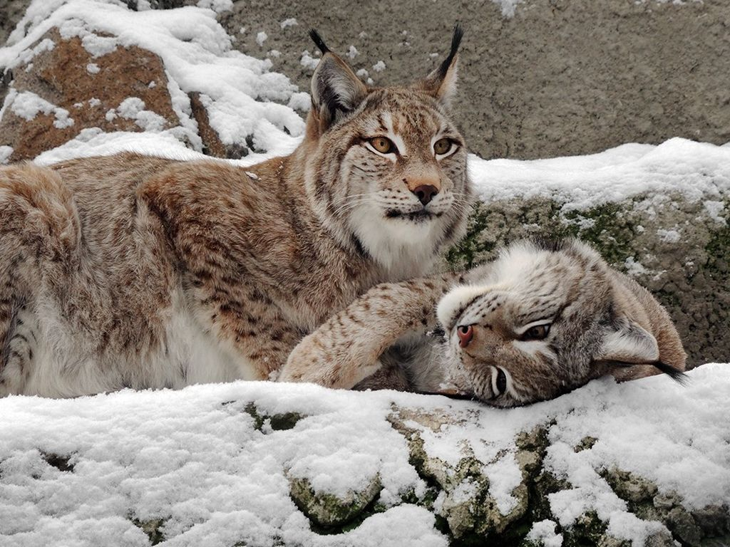 Животные в Московском зоопарке